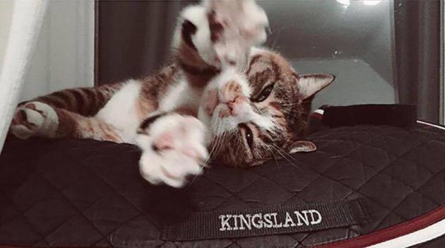 KINGSLAND MOMENTS