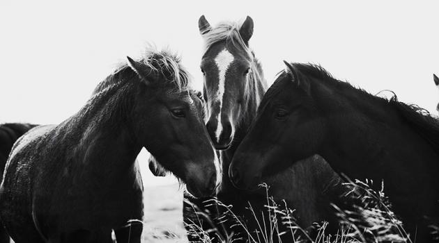 YOUR HORSE AND YOU