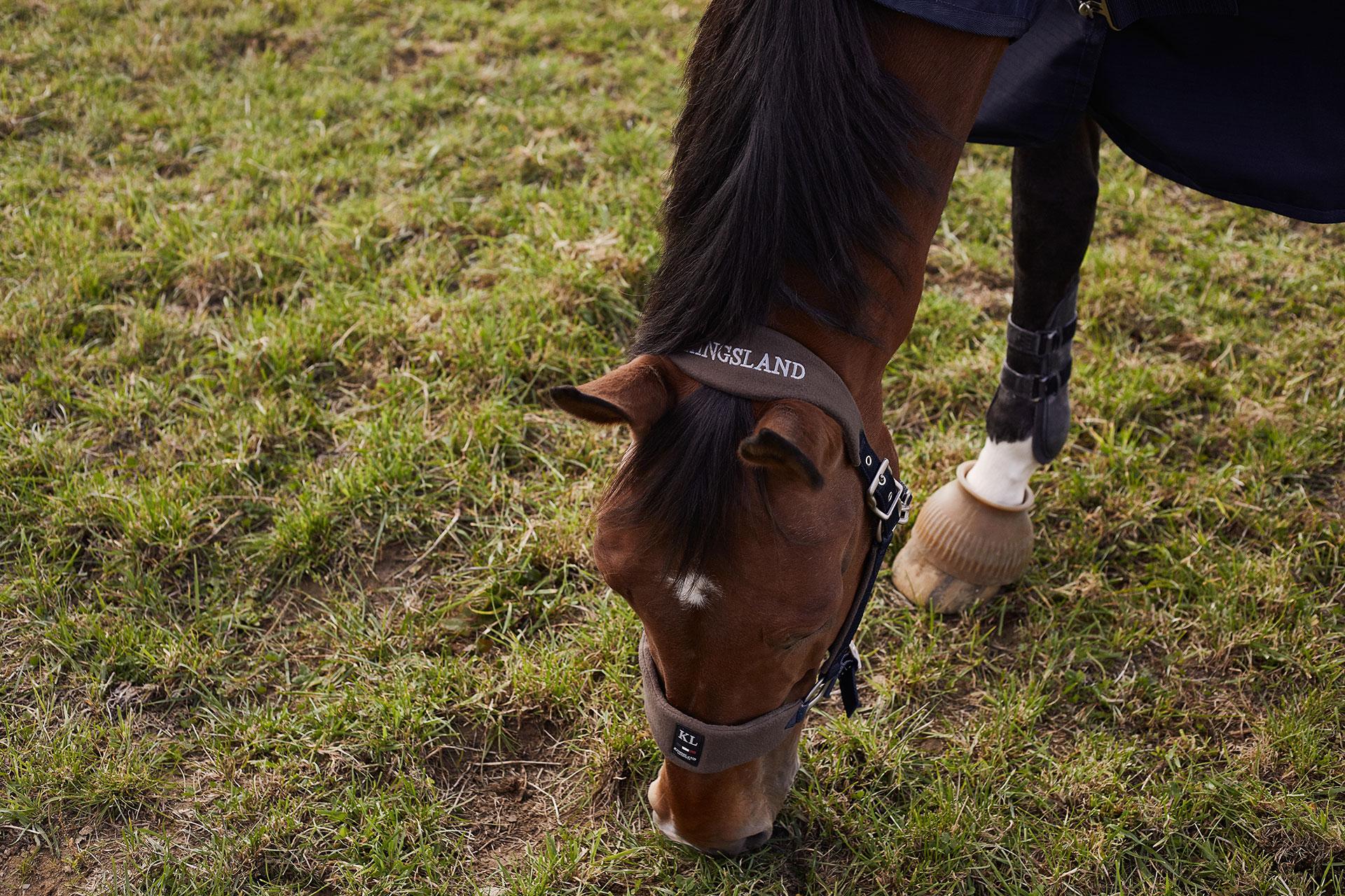 KINGSLAND FABULOUS HORSE GEAR